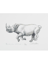 Black Rhinoceros by Jonathan Kingdon