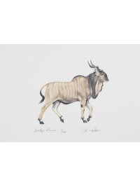 Derby's Eland by Jonathan Kingdon