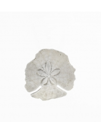 Sand Dollar by Fleur Mathews