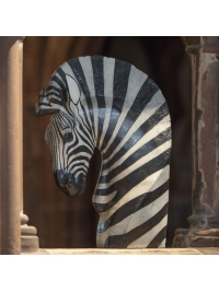 Hartmann's Mountain Zebra by Jonathan Kingdon
