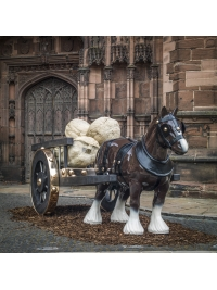 Ark: at Chester Cathedral