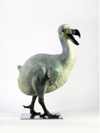 Dodo by Nick Bibby