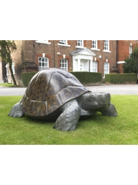 Tortoise by Michael Cooper