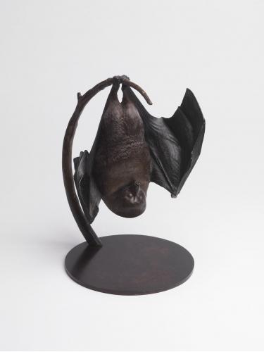 Lesser Mascarene Fruit Bat