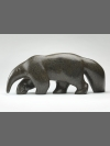 Anteater by Michael Cooper
