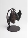Lesser Mascarene Fruit Bat by Nick Bibby